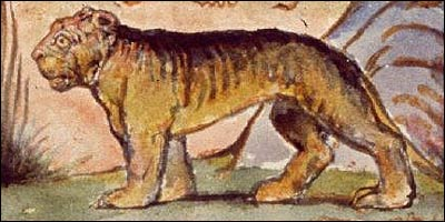 Image result for tyger william blake