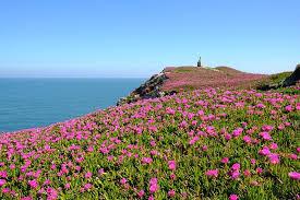 flower on cliff